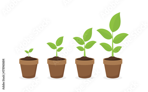 Fotografia  growing plant in process. on white background.