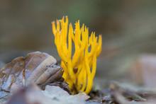 Orange Coral Fungi Macro