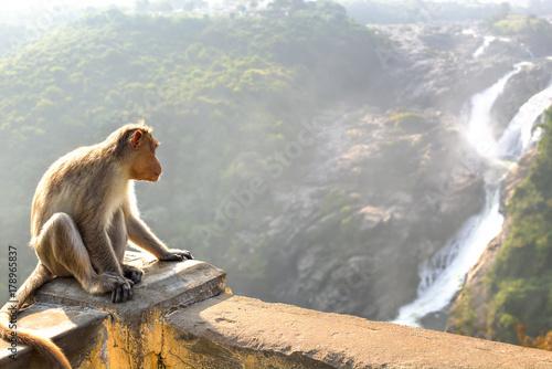 Foto op Aluminium Aap Monkey posing on Shimsa falls, India