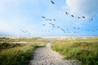 canvas print picture - Langeoog, Fliegen, Freiheit, Urlaub, Entspannung: Wildgänse an einer Ostseeküste :)