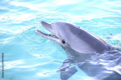 Fotografie, Obraz  Portrait of a bottlenose dolphin
