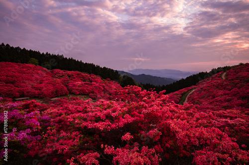 Spoed Foto op Canvas Lavendel 奈良県 葛城山 ツツジ