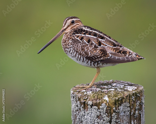 Canvas Print Snipe on post