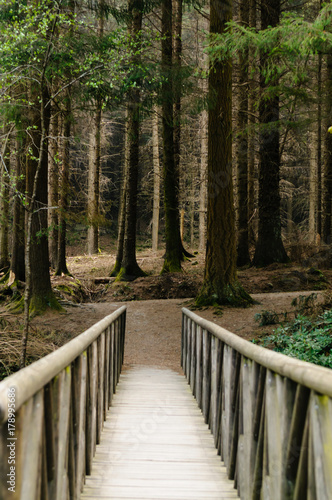 Fotomural Wooden bridge leading to a dark forest of larch trees, as featured in a scene in