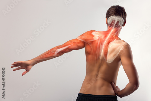 Fotografie, Obraz  Back view of human arm and scapula muscle.
