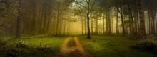Forset Path