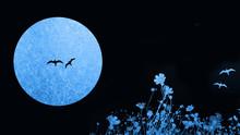 満月と鳥2羽 夜景