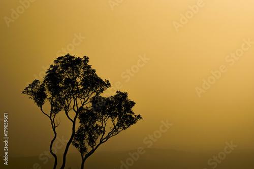 In de dag Beige silhouette tree background