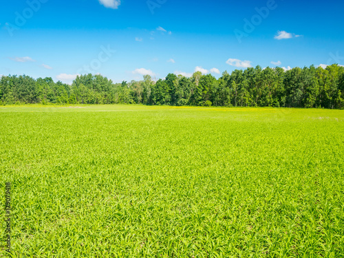Foto op Canvas Platteland Green Field In Summer