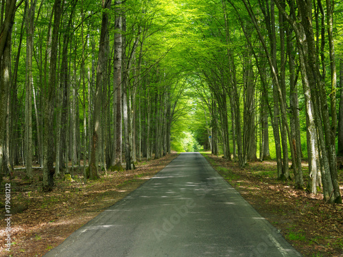 Foto op Canvas Weg in bos Ecological Path Through Forest