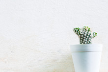 Green Cactus On White Plastic Vase With White Concrete On For Background