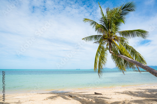 Photo Stands Caribbean Coconut trees stretch into the sea