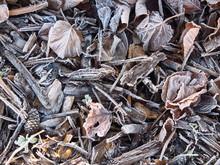 Feuilles Mortes Et Morceaux De Bois Givrés Au Sol En Automne