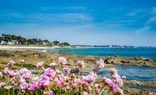 Plage De Carnac Rochers Et Fleurs, Morbihan, Bretagne, France