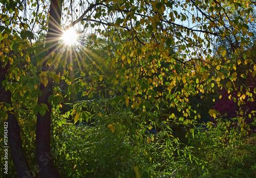 Foto op Aluminium Pistache Sunbeames behind a tree