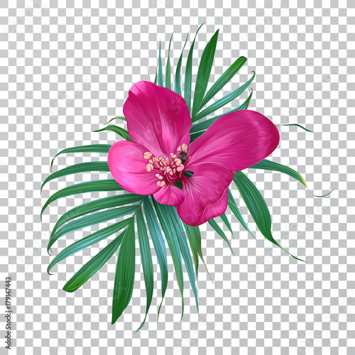 Vector realistic flower and palm leaves on a transparent background. Exotic floral. Trendy colorful design for t-shirt, fashion, print, fabric. Blooming Bouquet. Vintage style.
