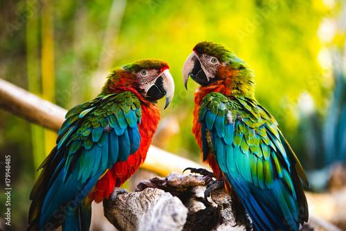Naklejki papugi  papuga-nr-1