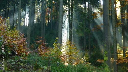 Garden Poster Forest Waldweg in Klingenthal