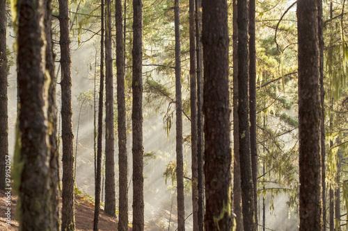 Papiers peints Foret brouillard Gran Canaria, Natural Park Tamadaba