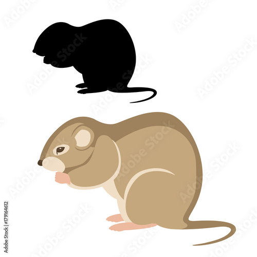 Fotografía  mouse vole vector illustration flat style black silhouette set side