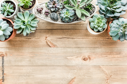 Tuinposter Bloemen floral frame with succulents minimal creative berry arrangement pattern on wooden background. flat lay, top view. christmas background wallpaper.