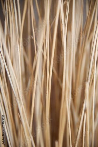 Foto op Canvas Paardebloemen en water Dried straw (3rd)
