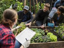 Group Of People Planting Veget...