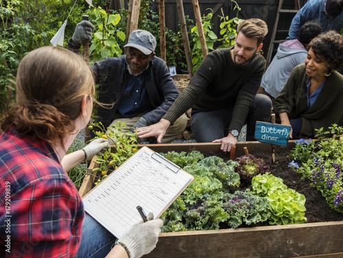 Group of people planting vegetable in greenhouse Fototapete