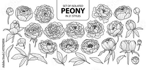 Obraz na plátně  Set of isolated peony in 21 styles