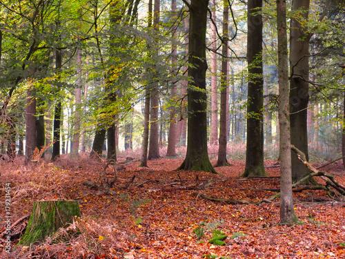 Fotografie, Obraz  Deep Woods in Fall