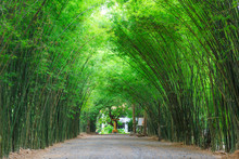 Arbor Bamboo Forest That Occurs Naturally In Chulabhorn Wanaram Temple, The Famous Place At Nakhon Nayok Province