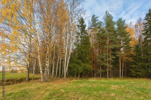 Bright autumn landscape