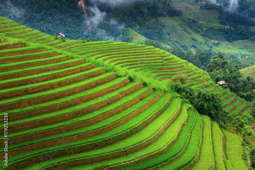 Garden Poster Rice fields Landscape of land fields and rice terrace at Sapa, Vietnam