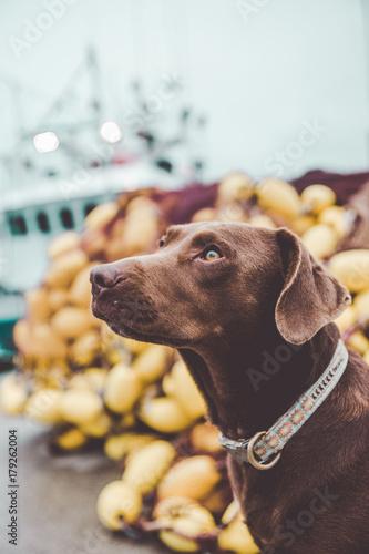 Cute dog in harbor