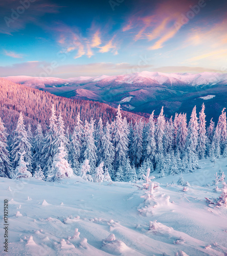 Foto-Leinwand ohne Rahmen - Fantastic winter sunrise in Carpathian mountains with snow cowered trees. (von Andrew Mayovskyy)