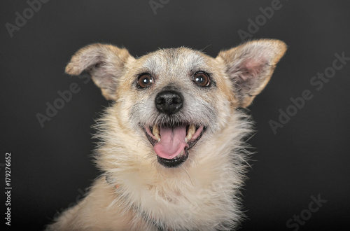 Leinwand Poster  small mongrel terrier on a dark background