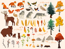 Set Of Cute Autumn Forest Elements - Animals, Trees And Other. Vector Decorative Cute Illustration For Design