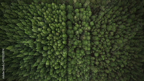 Aerial View of Trees and Plantation - 179325074