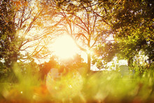 Sunlight Shining In A Backyard, Blurred Foreground