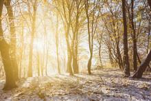 Autumn Winter Landscape, The R...