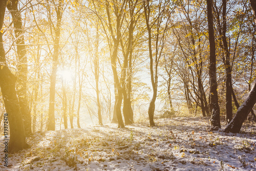Tuinposter Honing autumn winter landscape, the rays of the rising sun and the first snow in the autumn forest