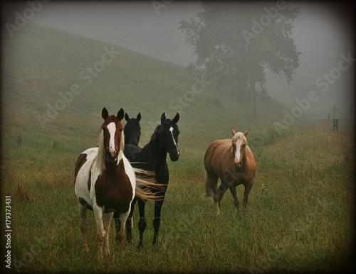 Fototapeta cavalry