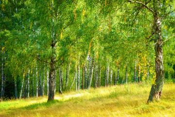 Fototapeta Do biura Spring Nature. Beautiful Landscape.