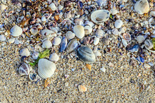 Colored Sea Shells Standing In...