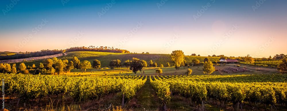Fototapeta Sunset landscape bordeaux wineyard france