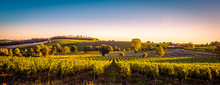 Sunset Landscape Bordeaux Wine...