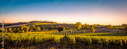 Tuinposter Wijngaard Sunset landscape bordeaux wineyard france