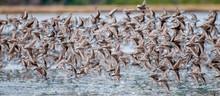 Migrazione Migliaia Uccelli In...