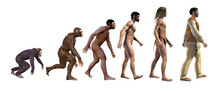 Human Evolution, 3d Rendering