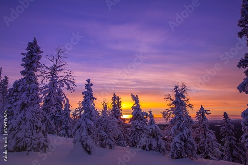Prune Trees covered with hoarfrost and snow in winter mountains
